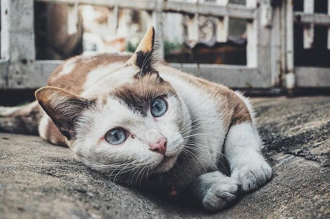 猫がくつろいでこちらを見ている